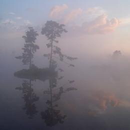 Сосны на острове на болоте на Первом Участке утром / Сосны на острове на болоте на Первом Участке утром