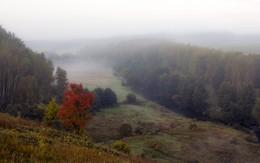 Яркий акцент в тумане / ***