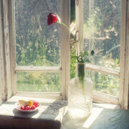 Мак в графине на окне в Овсянниково летом 2009 / Мак в графине на окне в Овсянниково летом 2009