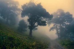 В туманной сказке Приэльбрусья / Снято на закате в горах Приэльбрусья, близ поселка Терскол.  http://www.youtube.com/watch?v=txQ6t4yPIM0