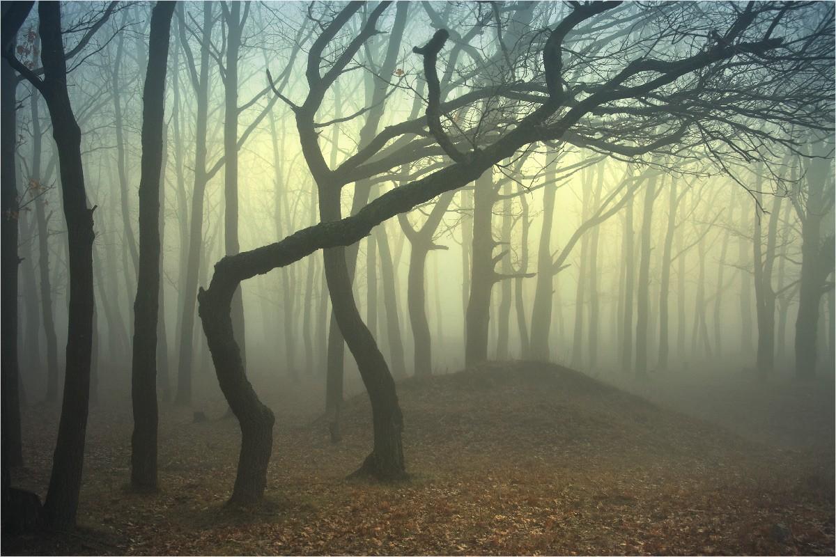 Скрыто снято в лесу 27 фотография