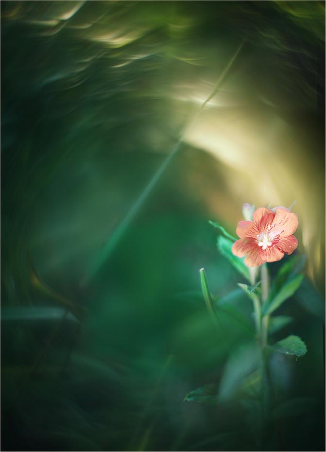 Яркая скромность / Истинная скромность открывает Путь ярким и светлым поступкам...