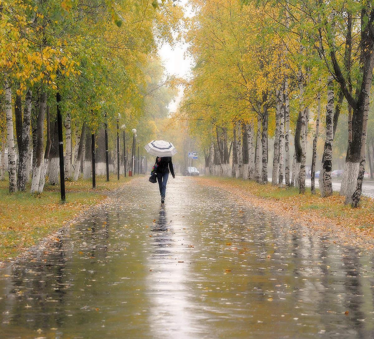 Идет дождь осенью