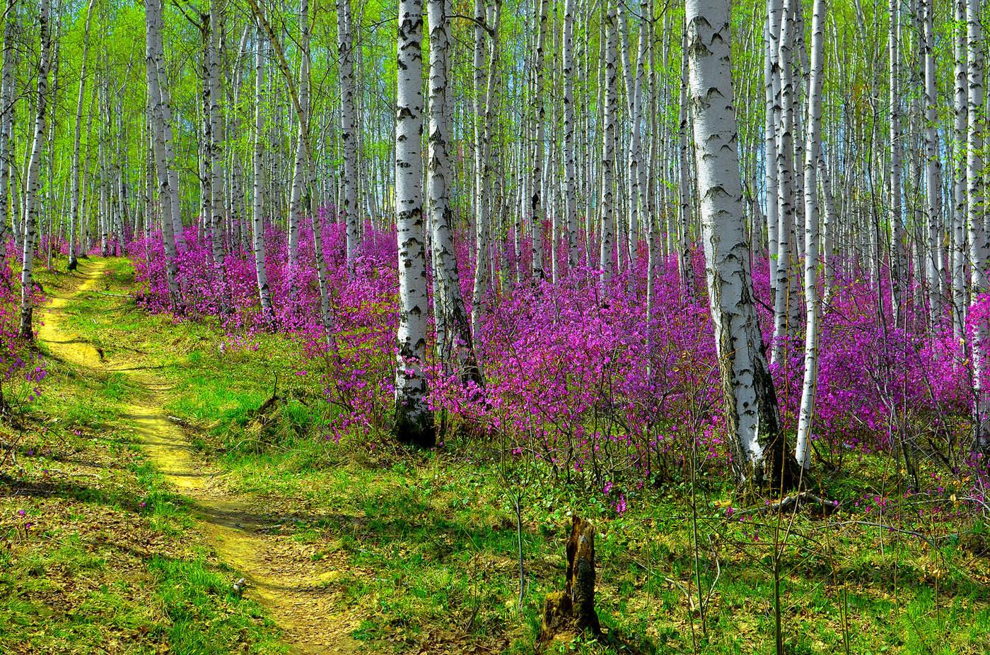 Фото пейзажи весна 4
