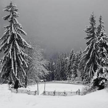 Белым снегом зима запорошила....
